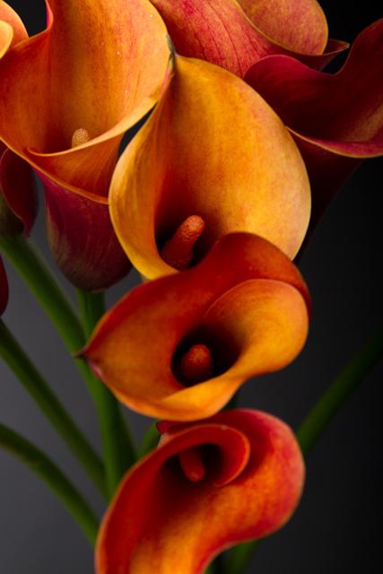 Wallflower or Blooming Beautiful?